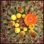 Cactus-Color
