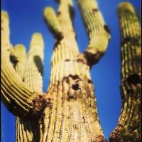 Cactus-II