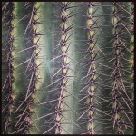Cactus-Points
