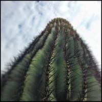 Cactus-in-Phoenix