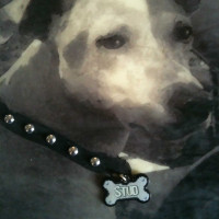 Detail photo showing studs and dog tag