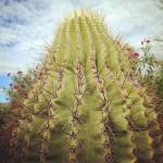 Phoenix-Cactus